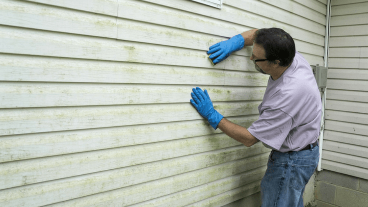 Why Does Mildew Grow on Vinyl Siding