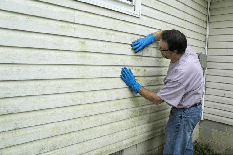 Clean your vinyl siding regularly to prevent mold and mildew stains.