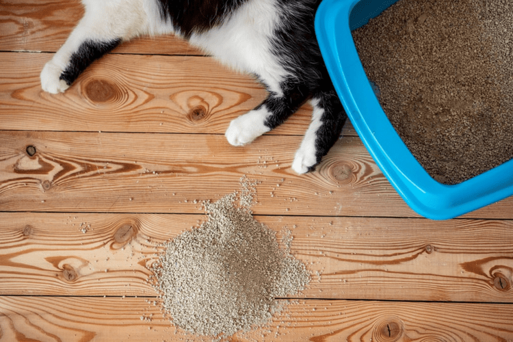 Missing the litter box could be an indicator of an underlying medical issue.