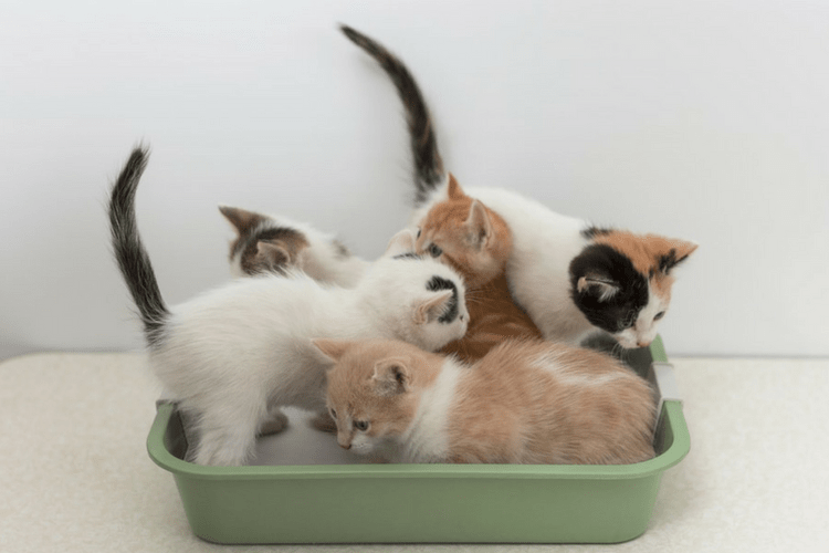Making sure that you have enough litter boxes for your cats can prevent them from peeing outside of the litter box.