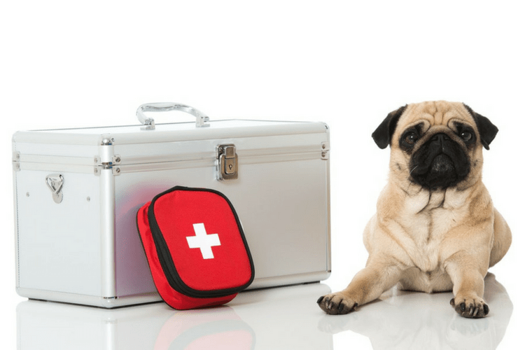Plan for emergencies with a pet disaster kit.