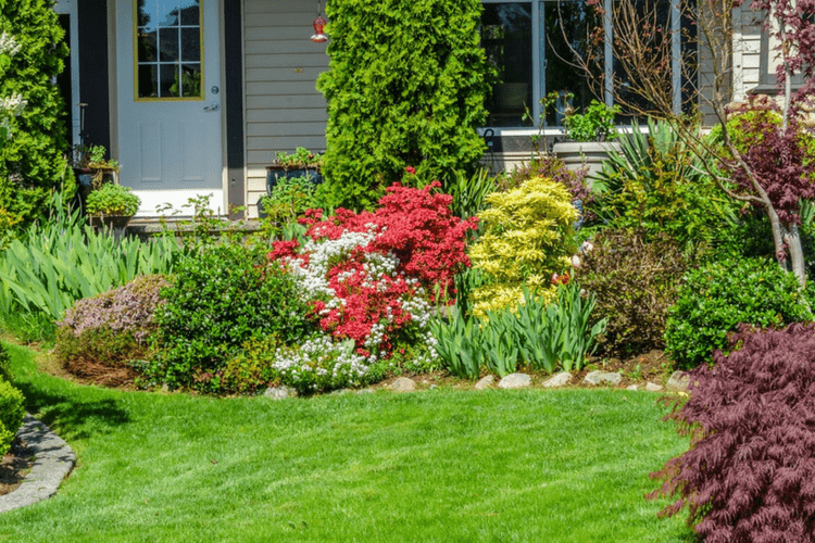 Follow these 6 steps for easy lawn care.