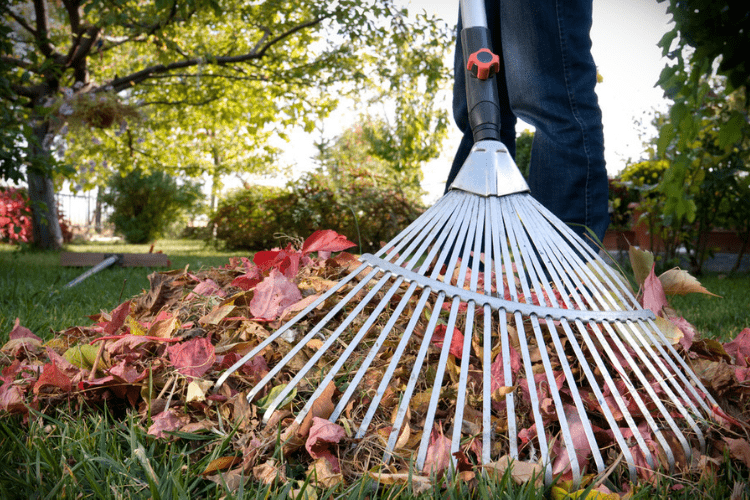 Find the best leaf rake for you and your yard!