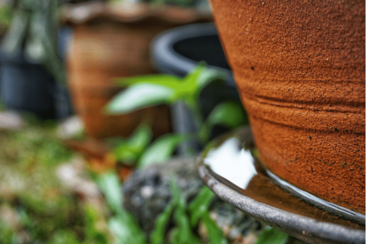 Prevent mosquitoes by planting the right plants and limiting the amount of standing water in your yard.