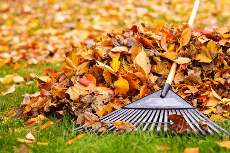 Leaf rakes are improving with technology – find the best one for you in this article.