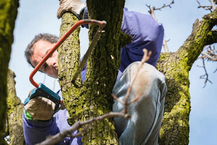 Pruning trees requires specific tools, read on for the types of tools you need to prune a tree.