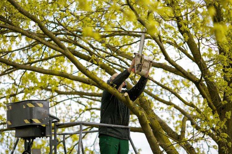 Check out this list of tools you need to trim your own trees.