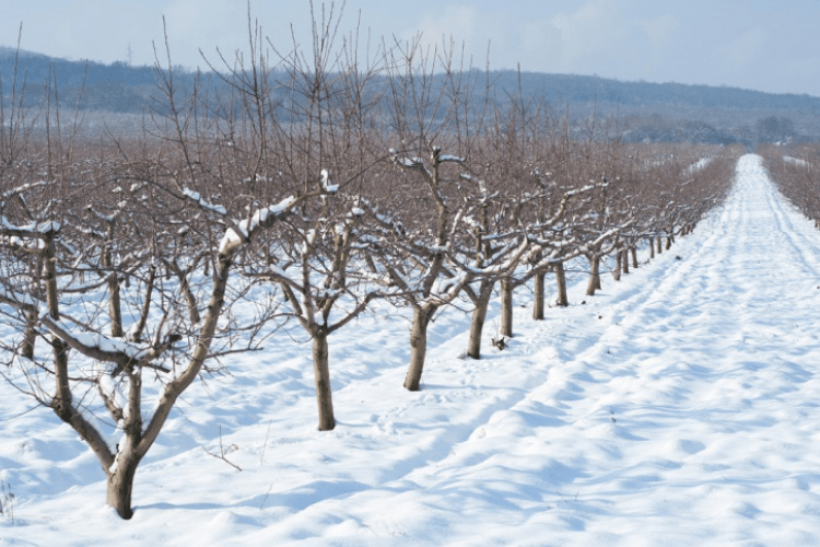 In the wintertime the task of pruning dead growth becomes a lot trickier.