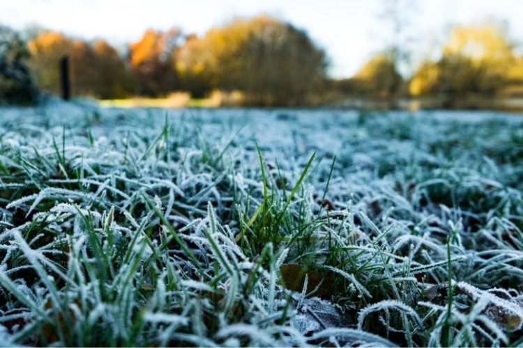 Winter grass care will vary based on regional location, but there are some basic tips everyone should follow.