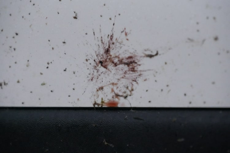 Bugs guts don't only make your car look dirty, they could also damage the surface of your vehicle.
